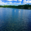 Swans on the St. Joe River in Elkhart, Ind.<br /> <br /> Photographer's Name: J.R. Rosencrans<br /> Photographer's City and State: Alexandria, Ind.