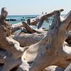 Lots of driftwood at Whitefish Point in Upper Michigan.<br /> <br /> Photographer's Name: Jerry Byard<br /> Photographer's City and State: Anderson, Ind.