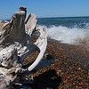 Driftwood at Whitefish Point offers photo opportunities.<br /> <br /> Photographer's Name: Jerry Byard<br /> Photographer's City and State: Anderson, Ind.