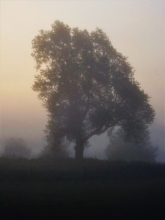Morning farm fog in Richland Township.<br /> <br /> Photographer's Name: J.R. Rosencrans<br /> Photographer's City and State: Alexandria, Ind.