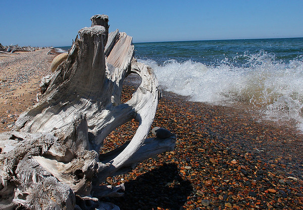 Driftwood and waves on Lake Superior at Whitefish Point.<br /> <br /> Photographer's Name: Jerry Byard<br /> Photographer's City and State: Anderson, Ind.
