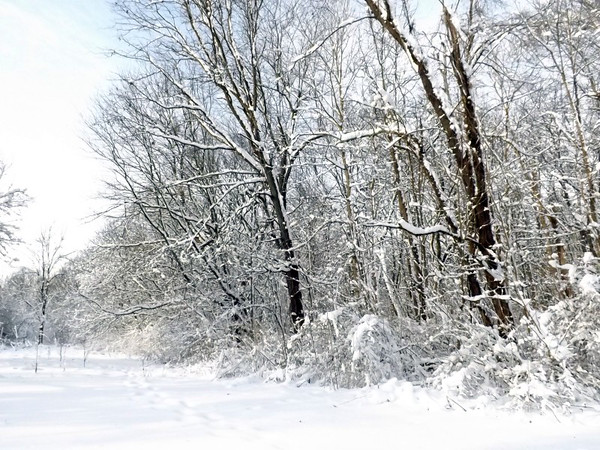Snowy pasture at my farm in Richland Township.<br /> <br /> Photographer's Name: J.R.  Rosencrans<br /> Photographer's City and State: Alexandria, Ind.