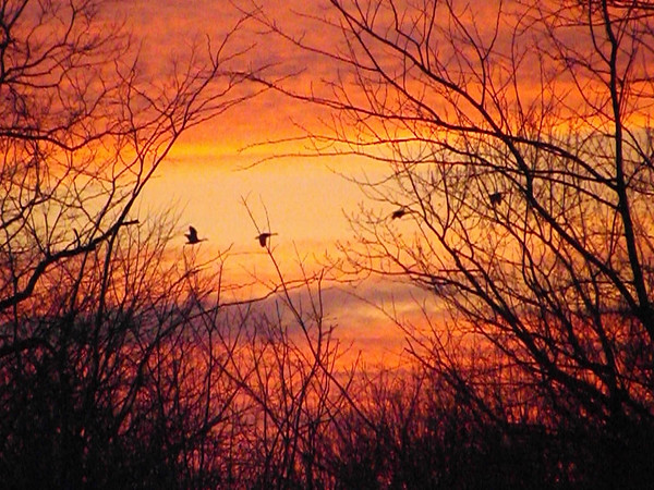 Geese flying at sunset in Richland Township.<br /> <br /> Photographer's Name: J.R. Rosencrans<br /> Photographer's City and State: Alexandria, Ind.
