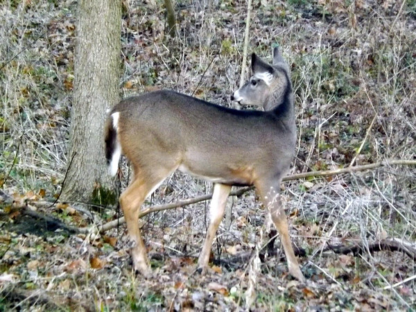 Did you hear that? My woods in Richland Township.<br /> <br /> Photographer's Name: J.R. Rosencrans<br /> Photographer's City and State: Alexandria, Ind.