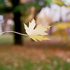 A leaf suspended on spider silk.<br /> <br /> Photographer's Name: David Harrington<br /> Photographer's City and State: Anderson, Ind.