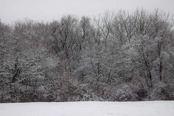 Evening snow in Richland Township.<br /> <br /> Photographer's Name: J.R. Rosencrans<br /> Photographer's City and State: Alexandria, Ind.