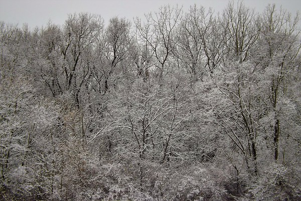 The quiet sound of falling snow in Richland Township.<br /> <br /> Photographer's Name: J.R. Rosencrans<br /> Photographer's City and State: Alexandria, Ind.
