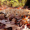 A fungus covered log in the woods at Mounds Park.<br /> <br /> Photographer's Name: Jerry Byard<br /> Photographer's City and State: Anderson, Ind.
