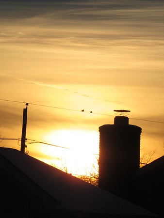 Two birds, soaking in a liittle sun, on a cold December sunset.<br /> <br /> Photographer's Name: Harry Van Noy<br /> Photographer's City and State: Lafayette Township, Ind.