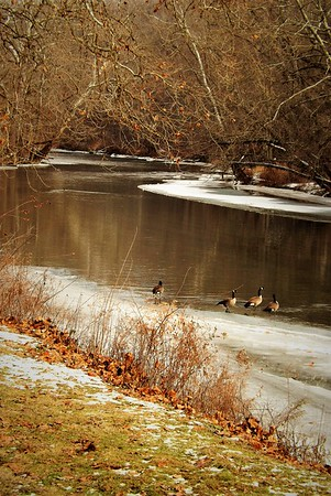 New Year's gathering...Mounds Park at the river.<br /> <br /> Photographer's Name: J.R. Rosencrans<br /> Photographer's City and State: Alexandria, Ind.