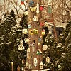 The bird house tree, taken at Mr. Bob West's property in Anderson.<br /> <br /> Photographer's Name: J.R. Rosencrans<br /> Photographer's City and State: Alexandria, Ind.