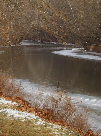 One is a lonely number around New Year's Eve on the White River.<br /> <br /> Photographer's Name: J.R. Rosencrans<br /> Photographer's City and State: Alexandria, Ind.