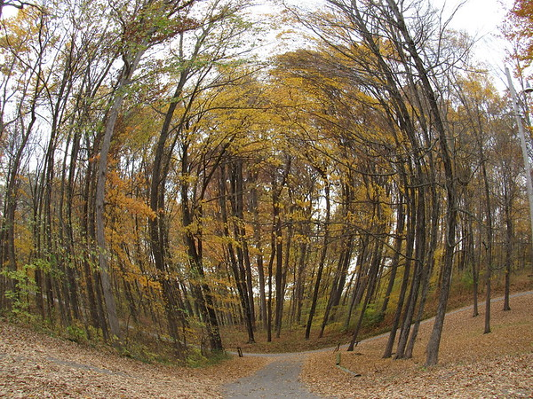 Fisheye view of autumn trees.<br /> <br /> Photographer's Name: Harry Van Noy<br /> Photographer's City and State: Lafayette Township, Ind.