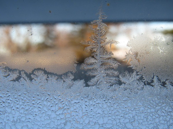 Frost, on a cold day in December.<br /> <br /> Photographer's Name: Harry Van Noy<br /> Photographer's City and State: Lafayette Township, Ind.
