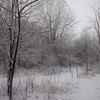 Touch of snow: My woods in Richland Township.<br /> <br /> Photographer's Name: J.R. Rosencrans<br /> Photographer's City and State: Alexandria, Ind.