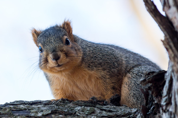 An inquisitive squirrel at Shadyside Lake on Dec 1.<br /> <br /> Photographer's Name: Ruby Northcutt<br /> Photographer's City and State: Anderson, Ind.