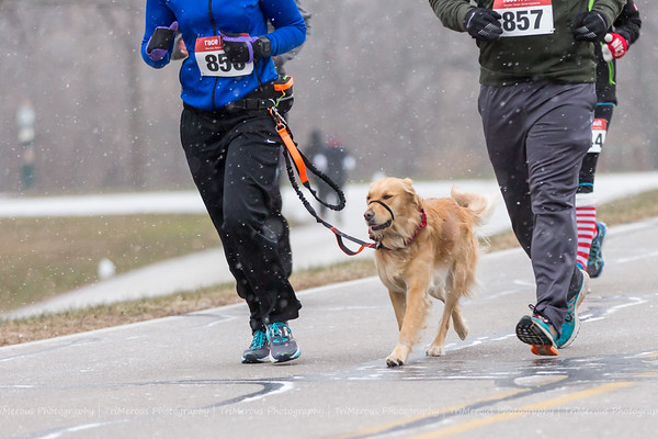 Dogs came out to participate in the Yorktown Fire & Ice 5K.<br /> <br /> Photographer's Name: Ruby Northcutt<br /> Photographer's City and State: Anderson, Ind.