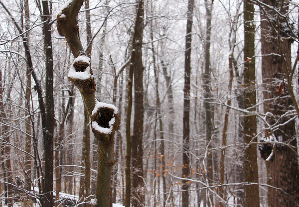 Interesting snowy eyes in the woods at Mounds Park.<br /> <br /> Photographer's Name: Jerry Byard<br /> Photographer's City and State: Anderson, Ind.