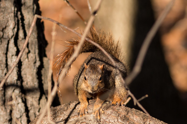 A squirrel playing at Shadyside Lake on Dec 1.<br /> <br /> Photographer's Name: Ruby Northcutt<br /> Photographer's City and State: Anderson, Ind.