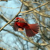 Drop in to the Visitors Center at Mounds Park and see a variety of wildlife at the feeders.<br /> <br /> Photographer's Name: Pete Domery<br /> Photographer's City and State: Markleville, Ind.