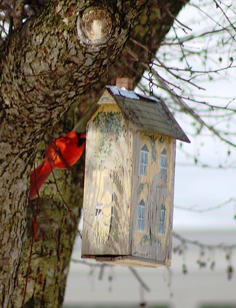 A cardinal does some early home shopping.<br /> <br /> Photographer's Name: Brian Fox<br /> Photographer's City and State: Anderson, Ind.