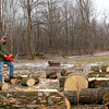 The ash tree wood removal at Mounds State Park brought several people to claim loads of firewood.<br /> <br /> Photographer's Name: Jerry Byard<br /> Photographer's City and State: Anderson, Ind.