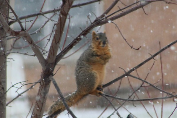 During the Winter Storm Feb.1, 2015.<br /> <br /> Photographer's Name: Brenda Holland<br /> Photographer's City and State: Anderson, Ind.