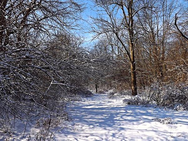 Last snow of the season, at  the back pasture.<br /> <br /> Photographer's Name: J.R.  Rosencrans<br /> Photographer's City and State: Alexandria, Ind.