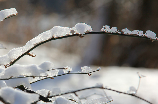 This bush had 'marching' snow and ice formations along its twigs at Mounds State Park.<br /> <br /> Photographer's Name: Jerry Byard<br /> Photographer's City and State: Anderson, Ind.