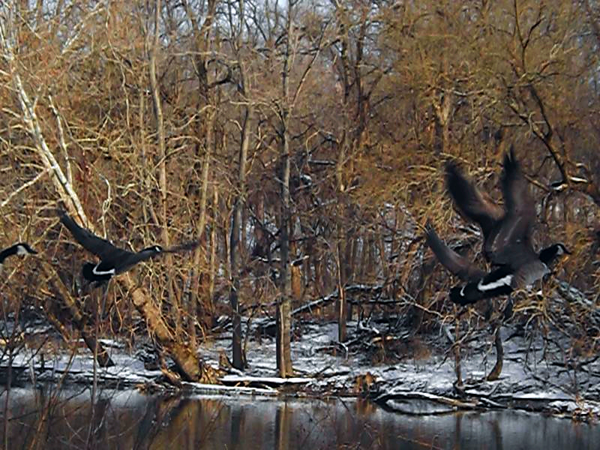 """White River flight,"" taken at Veteran's Bridge and Raible Avenue.<br /> <br /> Photographer's Name: J.R.  Rosencrans<br /> Photographer's City and State: Alexandria, Ind."