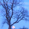 Snow moon in Richland Township.<br /> <br /> Photographer's Name: J.R. Rosencrans<br /> Photographer's City and State: Alexandria, Ind.