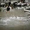 Flying ducks in Killbuck Creek.<br /> <br /> Photographer's Name: J.R. Rosencrans<br /> Photographer's City and State: Alexandria, Ind.