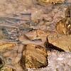 River rocks in Killbuck Creek.<br /> <br /> Photographer's Name: J.R. Rosencrans<br /> Photographer's City and State: Alexandria, Ind.