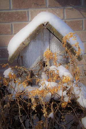 Snow insulation is for the birds.<br /> <br /> Photographer's Name: J.R. Rosencrans<br /> Photographer's City and State: Alexandria, Ind.