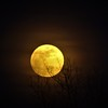Full moon in February.<br /> <br /> Photographer's Name: J.R. Rosencrans<br /> Photographer's City and State: Alexandria, Ind.