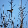 A single bird warming itself on a very cold day in Madison County. <br /> <br /> Photographer's Name: Harry Van Noy<br /> Photographer's City and State: Lafayette Township, Ind.