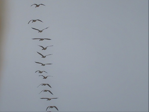 Geese flying over Mounds State Park.<br /> <br /> Photographer's Name: J.R. Rosencrans<br /> Photographer's City and State: Alexandria, Ind.