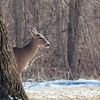 Playful deer at Mounds this week!<br /> <br /> Photographer's Name: Ruby Northcutt<br /> Photographer's City and State: Anderson, Ind.
