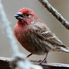 A finch on one of the feeders at Mounds Park.<br /> <br /> Photographer's Name: Jerry Byard<br /> Photographer's City and State: Anderson, Ind.