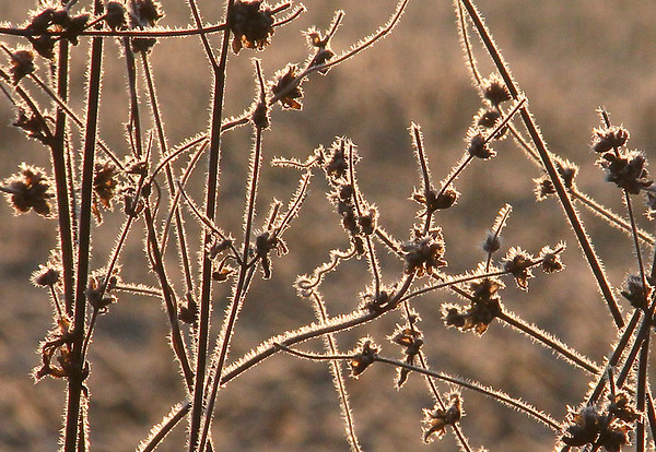 A close in photo of hoarfrost-covered weeds along a road in Anderson on Monday morning.<br /> <br /> Photographer's Name: Jerry Byard<br /> Photographer's City and State: Anderson, Ind.