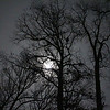 The moon shining through the trees at Mounds State Park casts an ethereal look in the woods.<br /> <br /> Photographer's Name: Jerry Byard<br /> Photographer's City and State: Anderson, Ind.
