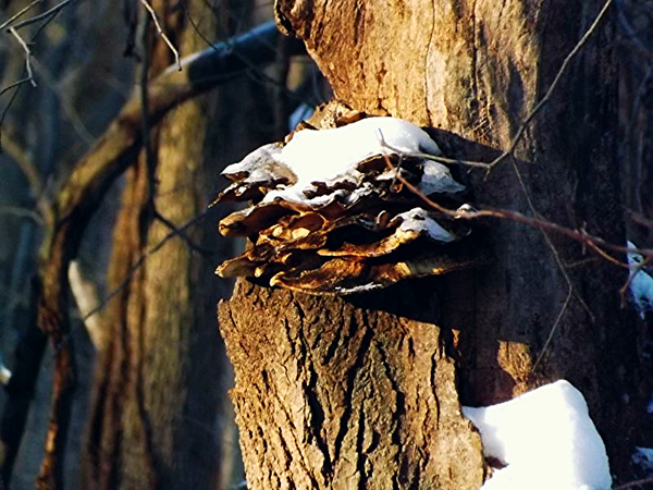 Fungi in my woods in Richland Township.<br /> <br /> Photographer's Name: J.R. Rosencrans<br /> Photographer's City and State: Alexandria, Ind.