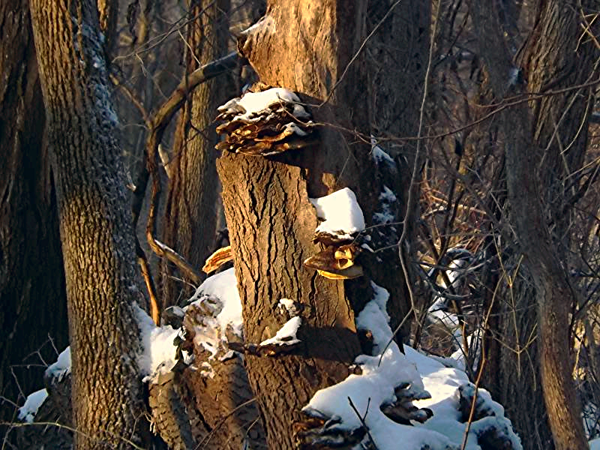 Winter in the woods in Richland Township.<br /> <br /> Photographer's Name: J.R. Rosencrans<br /> Photographer's City and State: Alexandria, Ind.