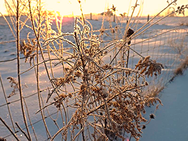 January frost at sunrise.<br /> <br /> Photographer's Name: J.R. Rosencrans<br /> Photographer's City and State: Alexandria, Ind.