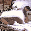 "My weather goose, predicting ""fowl"" weather.<br /> <br /> Photographer's Name: J.R. Rosencrans<br /> Photographer's City and State: Alexandria, Ind."