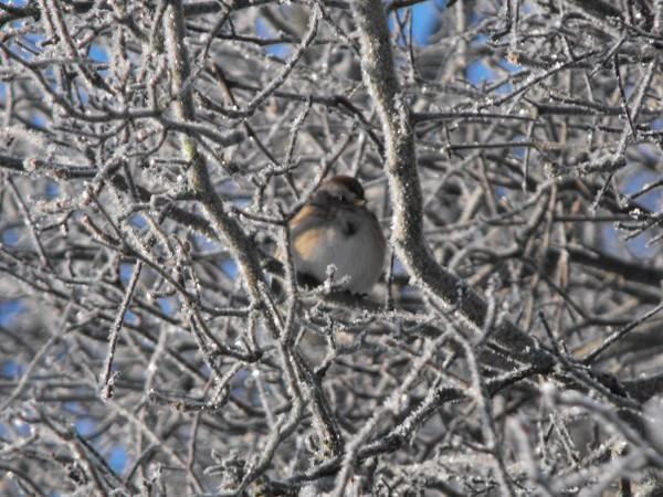 Cool bird shot on a cold morning in Richland Township.<br /> <br /> Photographer's Name: J.R.  Rosencrans<br /> Photographer's City and State: Alexandria, Ind.