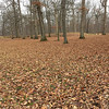A carpet of leaves surrounding the Great Mound at Mounds Park.<br /> <br /> Photographer's Name: Jerry Byard<br /> Photographer's City and State: Anderson, Ind.