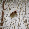 "A ""brrrrr"" bird at my farm.<br /> <br /> Photographer's Name: J.R. Rosencrans<br /> Photographer's City and State: Alexandria, Ind."