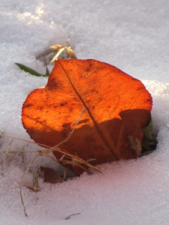 Leaf, with a warm sunshine, stuck in the cold ground.<br /> <br /> Photographer's Name: Harry Van Noy<br /> Photographer's City and State: Lafayette Township, Ind.