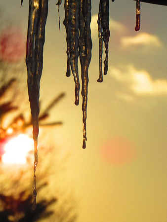 Icicles in a sunset background.<br /> <br /> Photographer's Name: Harry Van Noy<br /> Photographer's City and State: Lafayette Township, Ind.